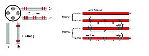 Klicken Sie auf die Grafik für eine größere Ansicht Name:Stamm1 und Stamm2.jpg Hits:2 Größe:42,8 KB ID:2482